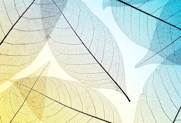 Vista superior de hojas translúcidas con tono de color.