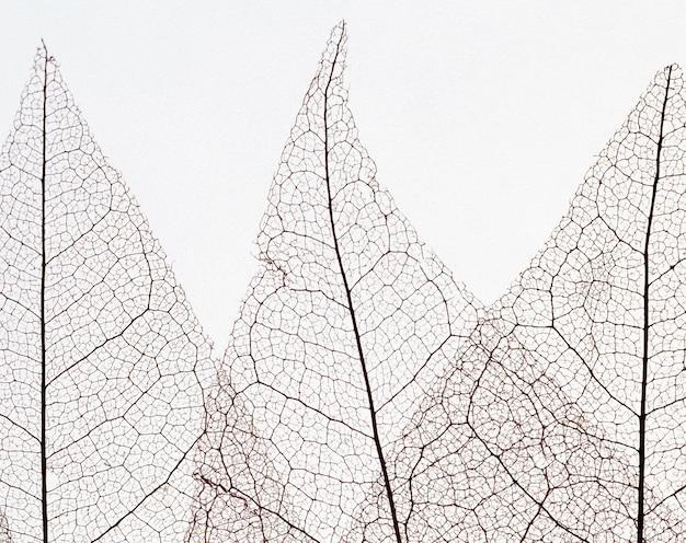 Vista superior de hojas transparentes