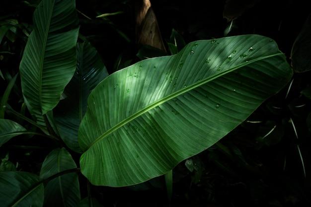 Vista superior de hojas tropicales con fondo borroso