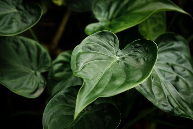 Vista superior de hojas verdes con fondo borroso