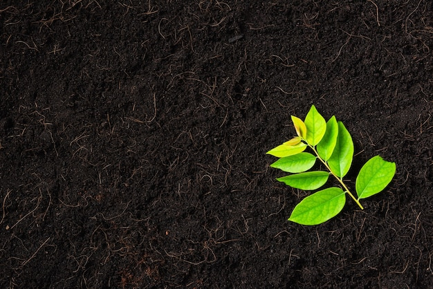 Vista superior de hojas verdes sobre suelo negro fresco