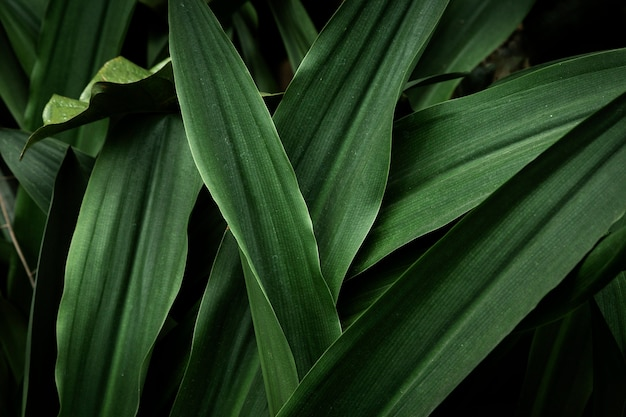 Vista superior de hojas verdes tropicales