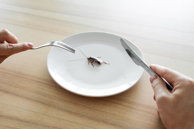 Vista superior, un hombre comiendo una cucaracha. cucaracha en un plato blanco sobre la mesa de la cocina. extrañas preferencias de sabor