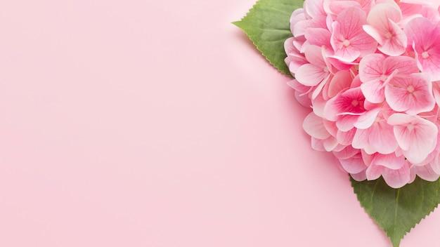 Vista superior hortensia rosa con espacio de copia