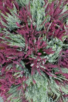 Vista superior del jardín lleno de flores coloridas flores de tallo largo