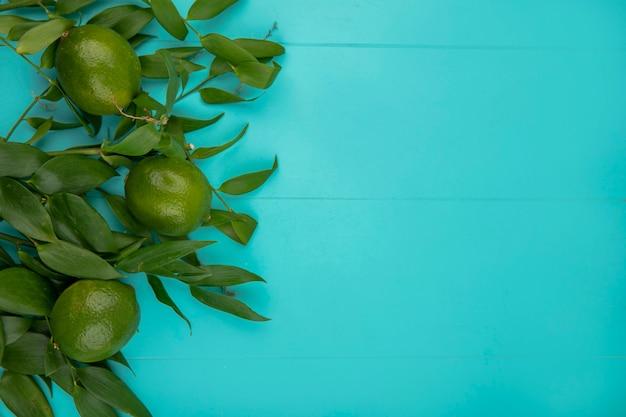 Vista superior de limón verde fresco con hojas sobre superficie azul