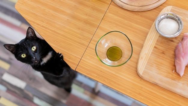 Vista superior lindo gato junto a la mesa