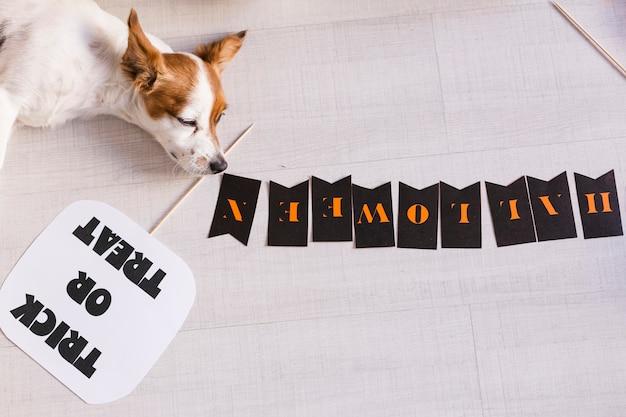 Vista superior de un lindo pequeño perro blanco y marrón joven tendido en el suelo junto a una calabaza y una guirnalda de halloween. hogar, mascotas adentro