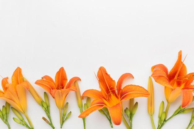 Vista superior de lirios naranjas con espacio de copia