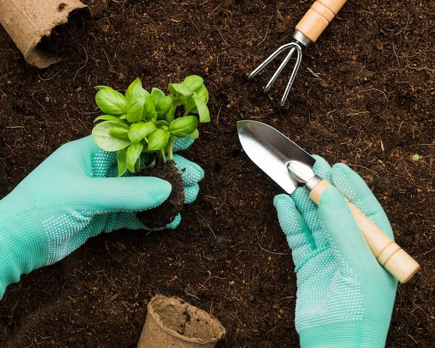 Vista superior manos plantando flor