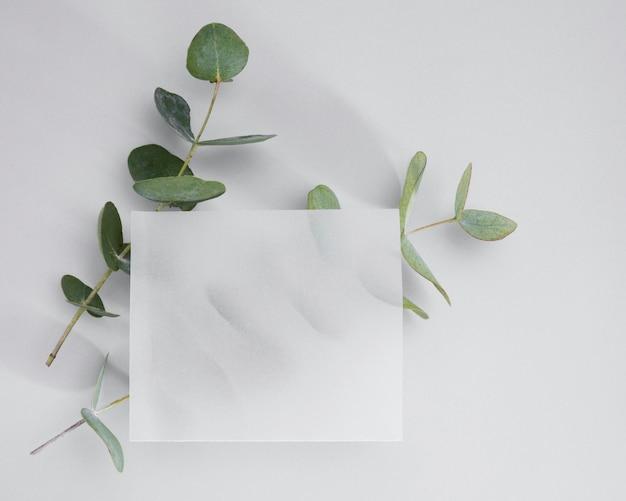Vista superior marco blanco rodeado de hojas