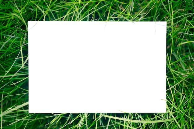 Vista superior del marco de césped verde del jardín y copie el espacio sobre fondo blanco. hojas verdes con tarjeta de papel. concepto natural.