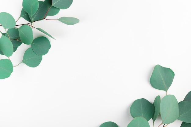 Vista superior del marco con hojas de eucalipto verde aisladas sobre fondo blanco.