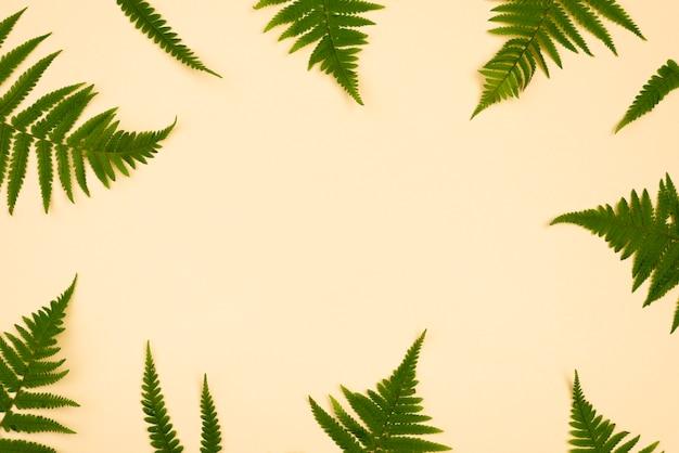 Vista superior del marco de hojas de helecho