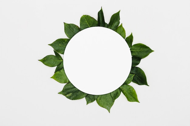 Vista superior marco hojas verdes