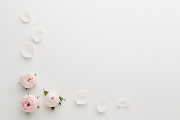 Vista superior del marco de pétalos de rosa y espacio de copia