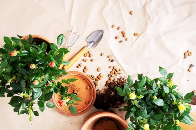 Vista superior de las mini rosas en macetas de cerámica y herramientas de jardinería con espacio libre para texto. preparándose para la primavera.
