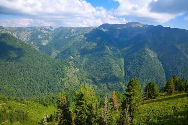Vista superior de las montañas del bosque