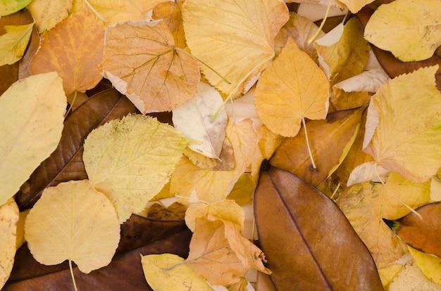 Vista superior montón de hojas de otoño