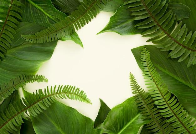 Vista superior de muchas hojas y helechos con espacio de copia