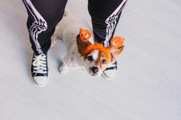 Vista superior de una mujer joven con su lindo perro pequeño con una diadema de calabaza. mujer vestida con un traje de esqueleto. concepto de halloween adentro