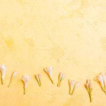 Vista superior de orquídeas de primavera con espacio de copia