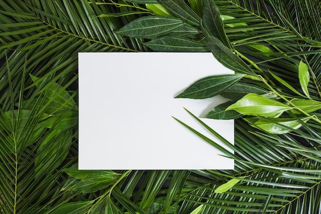 Vista superior de la página en blanco en blanco sobre hojas verdes