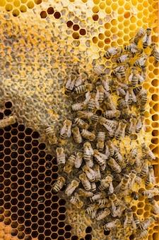 Vista superior de panal con abejas