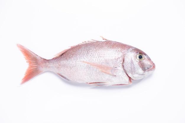 Vista superior de peces pargo rojo aislado