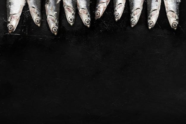 Vista superior de peces pequeños con espacio de copia