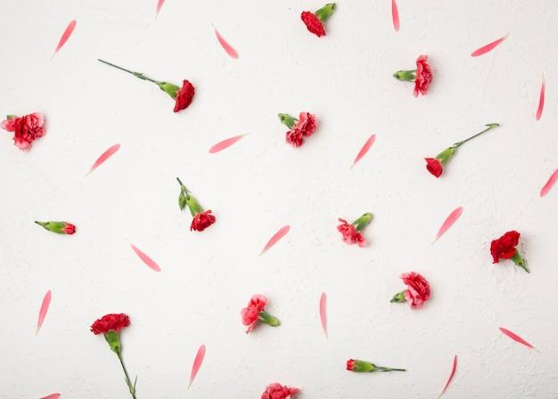 Vista superior pequeños clavel flores y pétalos