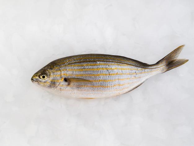 Vista superior pescado fresco y delicioso
