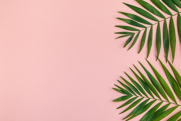 La vista superior plana creativa de la palma verde tropical deja el fondo de papel rosa milenario