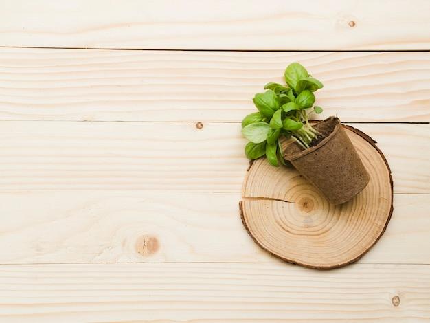 Vista superior planta sobre mesa de madera