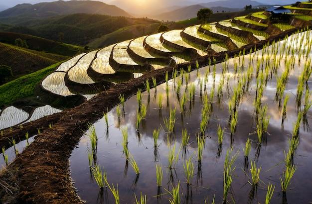 Vista superior de la plantación de campo de arroz en terrazas