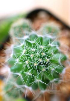 Vista superior de las plantas de mini cactus, plano macro de la textura de la planta