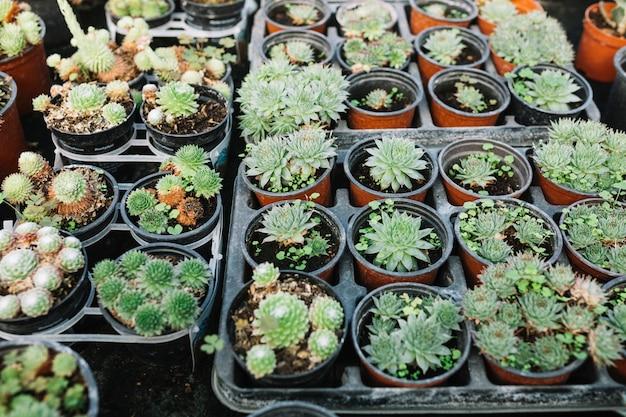 Vista superior de plantas suculentas en maceta