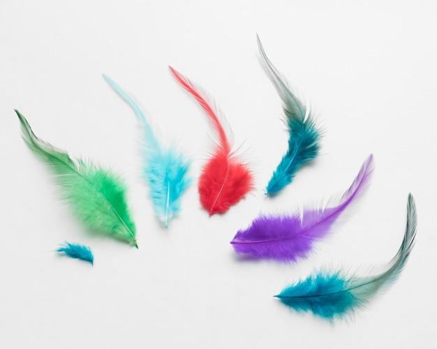 Vista superior de plumas de colores sobre fondo blanco.