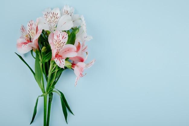 Vista superior de un ramo de flores de alstroemeria de color rosa sobre fondo azul con espacio de copia