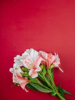 Vista superior de un ramo de flores de color rosa alstroemeria aislado sobre fondo rojo con espacio de copia
