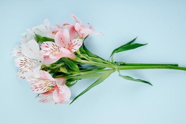 Vista superior de un ramo de flores de color rosa alstroemeria sobre fondo azul.