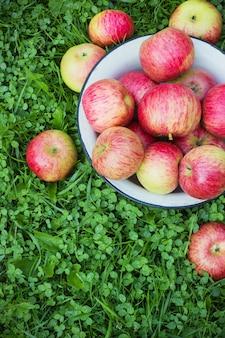Vista superior del recipiente metálico de manzanas rojas sobre hierba durante la temporada de otoño