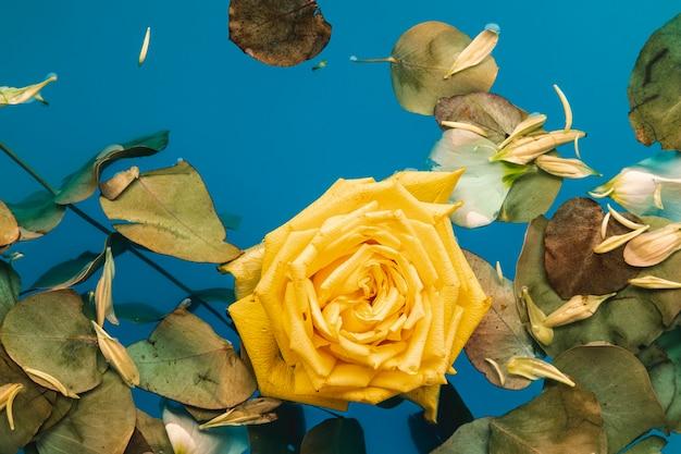 Vista superior rosa amarilla y hojas en agua con espacio de copia