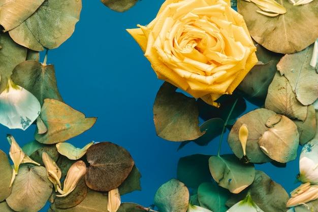 Vista superior rosa amarilla y hojas en agua