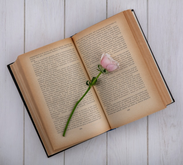 Vista superior de rosa claro en un libro abierto sobre una superficie gris