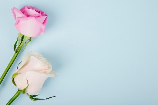 Vista superior de rosas de color rosa y blanco aisladas sobre fondo azul con espacio de copia