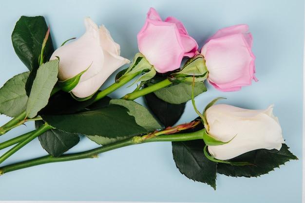 Vista superior de rosas de color rosa y blanco aisladas sobre fondo azul