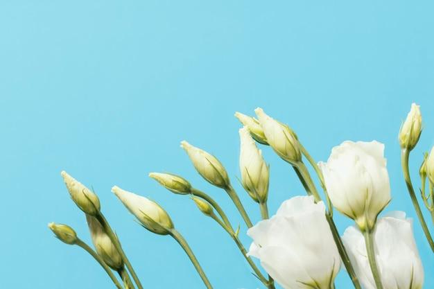 Vista superior de rosas de primavera con espacio de copia