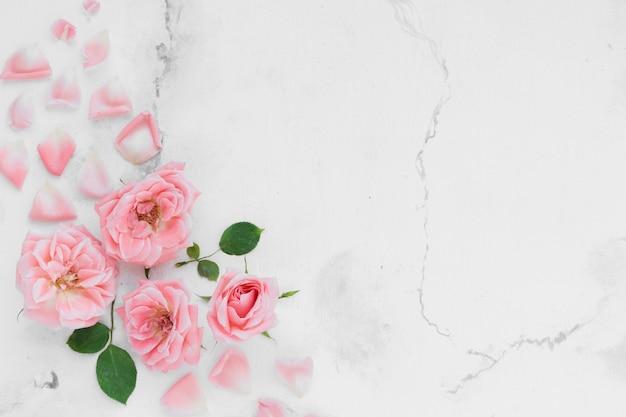 Vista superior de rosas de primavera con pétalos y fondo de mármol