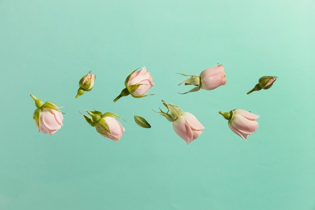Vista superior de rosas de primavera